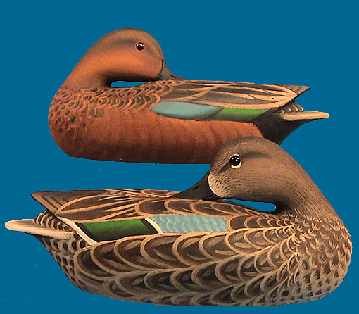 Marty Hanson Cinnamon Teal