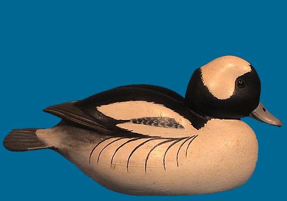 John McLoughlin Bufflehead