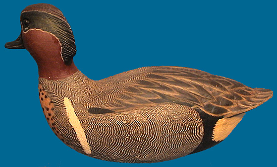 Cigar green wing teal