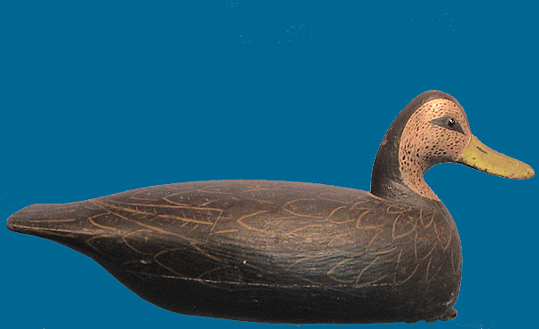 Rube Corless Black Duck