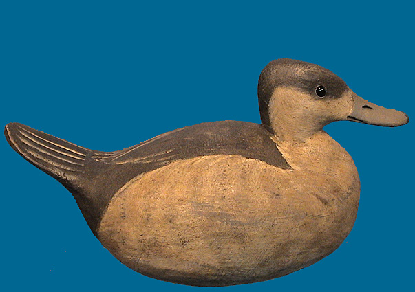 Reggie Birch Ruddy duck