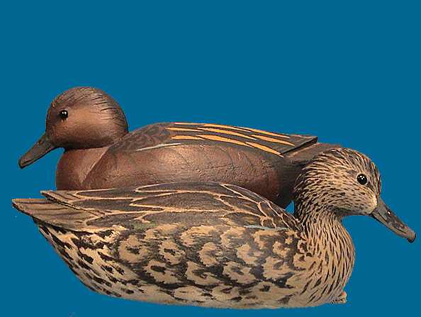 Grayson Chesser Cinnamon Teal