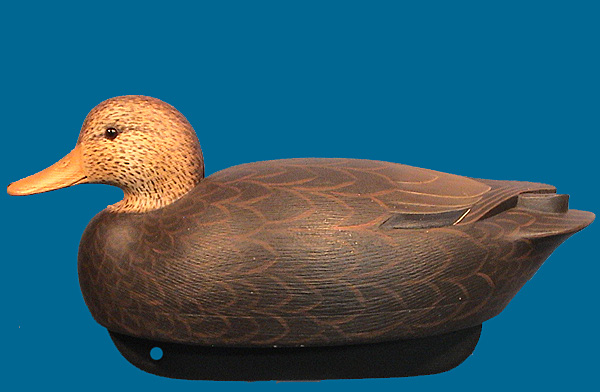 Daisey Black Duck