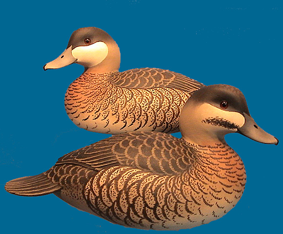 Oliver Lawson Ruddy Duck pair